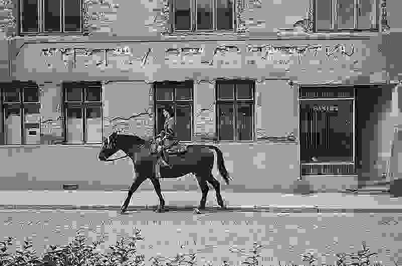 Horse Telc